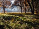 Sunrise - meadow #2772