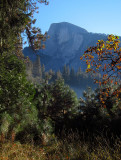 Vertical one of Half Dome behind shrubbery. .#2782
