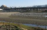 Return of the Birds to restored habitat.. 949