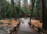 Path to Lower Falls in rain-soaked color. Day 2, SX. #2277