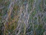 Yosemite Meadow grass a la Pollack #2600
