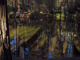 Merced River, reflections, shadows, and highlights. #2781