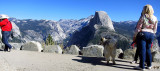 Glacier Point, with Half Dome ruling the view.  #2819