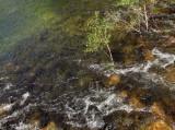Merced River under Swinging Bridge in Cook's Meadow #4199.