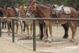 At the stables earlier that day where I'd reserved  a slot at 3pm. 5/25/12. 12:47 pm  #4340