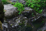 Tiny waterfall at bottom left. Click on original for larger images.  #00367