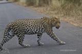 Kruger Park - South Africa 2012