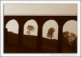 Trees Through Viaduct Arches