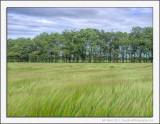 Walk through the Fields