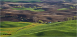 Palouse wheat fields