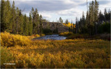 Yellowstone NP  Wy