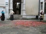 Sweeping rose petals