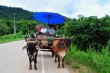 Elephant ride,Thailand