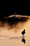San Joaquin Wildlife Sanctuary Birds