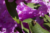 06/05/2011 - _MG_1616.jpg