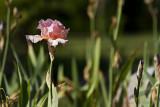 06/06/2011 - _MG_1641.jpg