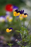 06/11/2011 - _MG_1682.jpg