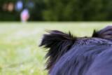 07/07/2011 - _MG_2295.jpg
