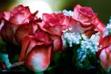 02/14/2012 - _MG_5202.jpg