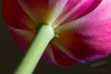 04/09/2012 - _MG_5515.jpg