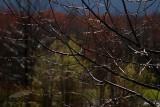 04/11/2012 - _MG_5566.jpg