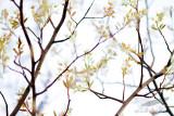 04/14/2012 - _MG_5574.jpg