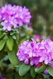 05/13/2012 - _MG_5891.jpg