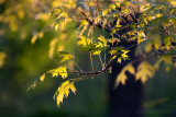05/17/2012 - _MG_5949.jpg