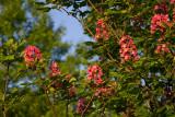 05/23/2012 - _MG_6049.jpg
