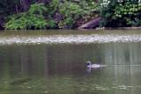 05/31/2012 - _MG_6258.jpg