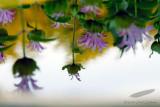 06/21/2012 - _MG_6505.jpg