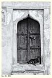 Old Indian Dog