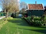 Algae-filled canal