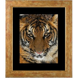 Tiger 2.jpg