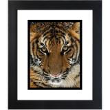 Tiger 3 Black frame.jpg