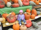 Katie in the pumpkin patch