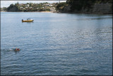 See how far they have to swim to Murrays Bay