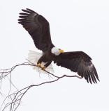::Klamath Falls Winter Wings::