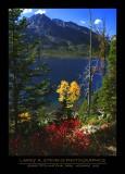 Flowers - GRAND TETON NP