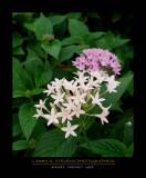 Flowers - Kauai