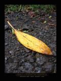 Banana Leaf - MAUI