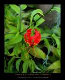 Flower - TATAKOTO