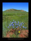 Flowers - THEODORE ROOSEVELT NP