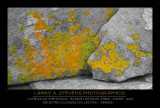 ACADIA NP - Lichens on a Rock