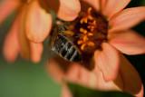 bee bottom