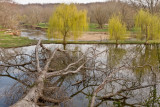 Winter's Damage - Spring's Hope
