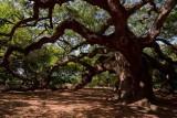 Angel Oak (64)