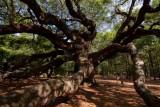 Angel Oak (66)