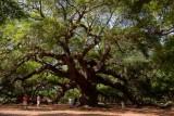 Angel Oak (69)