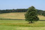 Lone Tree at Doe Run